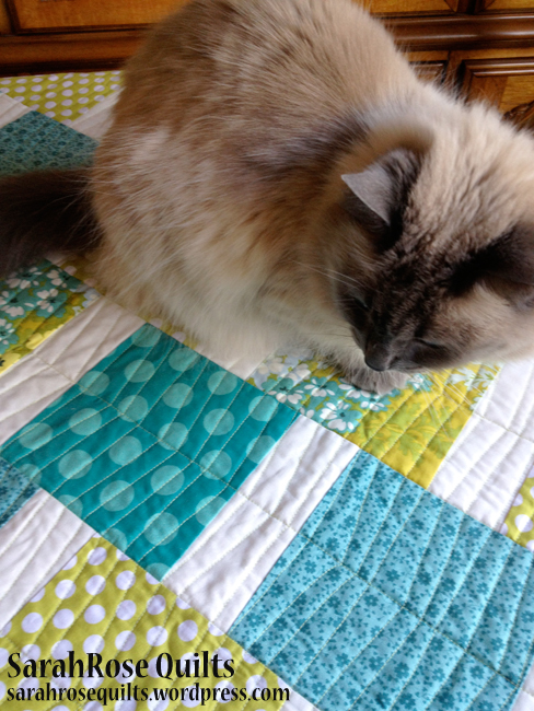 Sadie with Modern Squares Quilt
